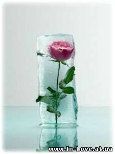 Льодяна троянда